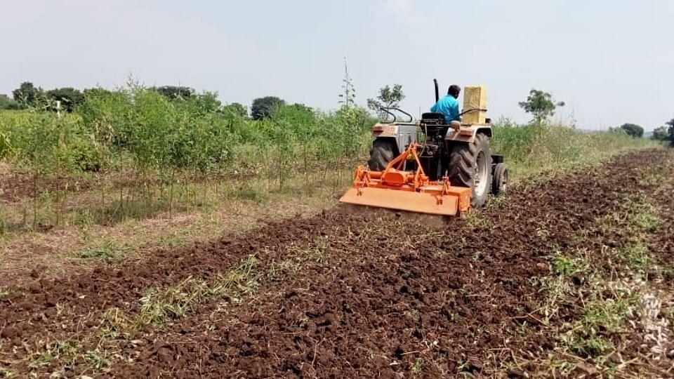 हिंगोलीत शेतकऱ्याने तुरीच्या पिकावर फिरवला नांगर