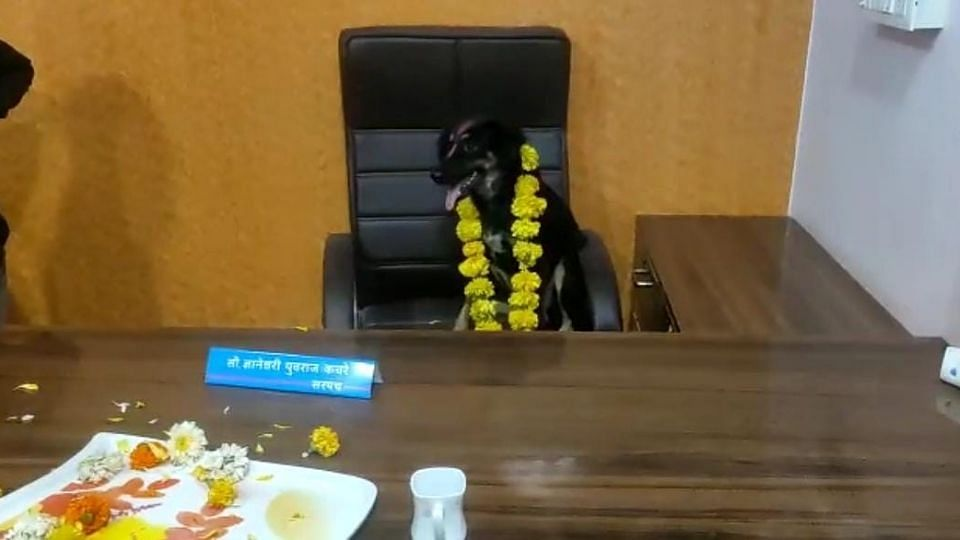 Beed: गैरहजर सरपंचाच्या खुर्चीवर चक्क कुत्रा बसवून ग्रामस्थांनी केला निषेध!