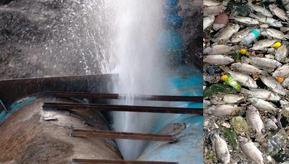 डोंबिवली: MIDCची जलवाहिनी फुटली; तलावातील शेकडो मासे मृत्युमुखी
