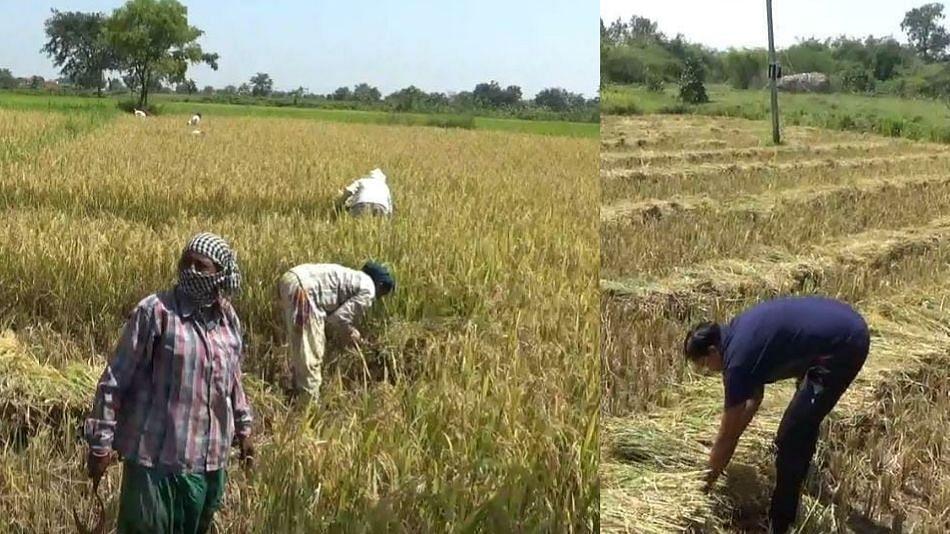 महाराष्ट्र बंद: 'तो' आजही शेतात राबतोय, शेतकऱ्याला सुट्टी नाहीच...