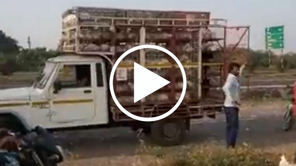 कोंबड्यांची वाहतूक करणाऱ्या टेम्पोला भीषण अपघात, लोकांनी पळवल्या कोंबड्या...(पहा व्हिडिओ)