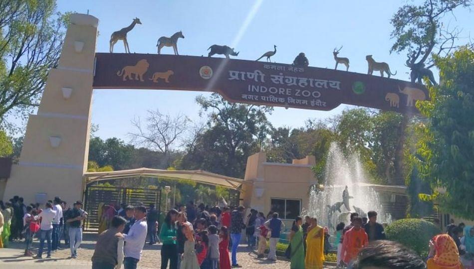 इंदूरच्या प्राणी संग्रहालयात साडेसतरा वर्षाच्या वाघाचा मृत्यू