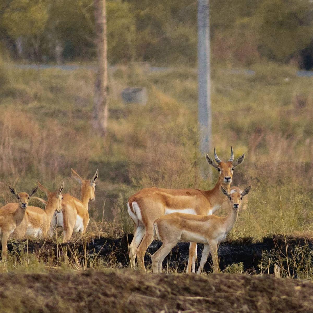 जंगलातील जलस्रोत आटल्याने, पाण्यासाठी वन्य प्राण्याची भटकंती