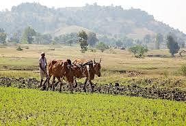 वाचा, दशकातल्या पहिल्या अर्थसंकल्पाने शेतीला काय दिलं? या घोषणांच्या पेरणीमुळे शेती क्षेत्र बहरणार का?