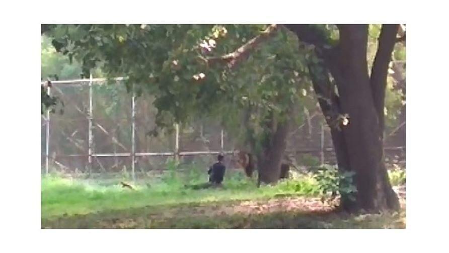 VIDEO   काळजाचा ठोका चुकवणारा थरार, सिंह आणि तो!