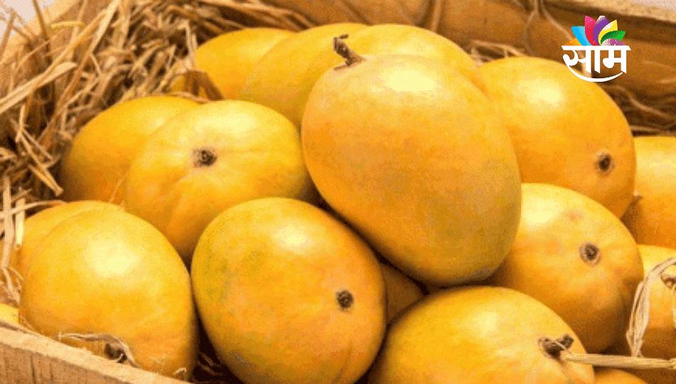 खायचाय आंबा; तर आठवडाभर थांबा! मुंबईमध्ये १७ हजार पेटी हापूसची आवक