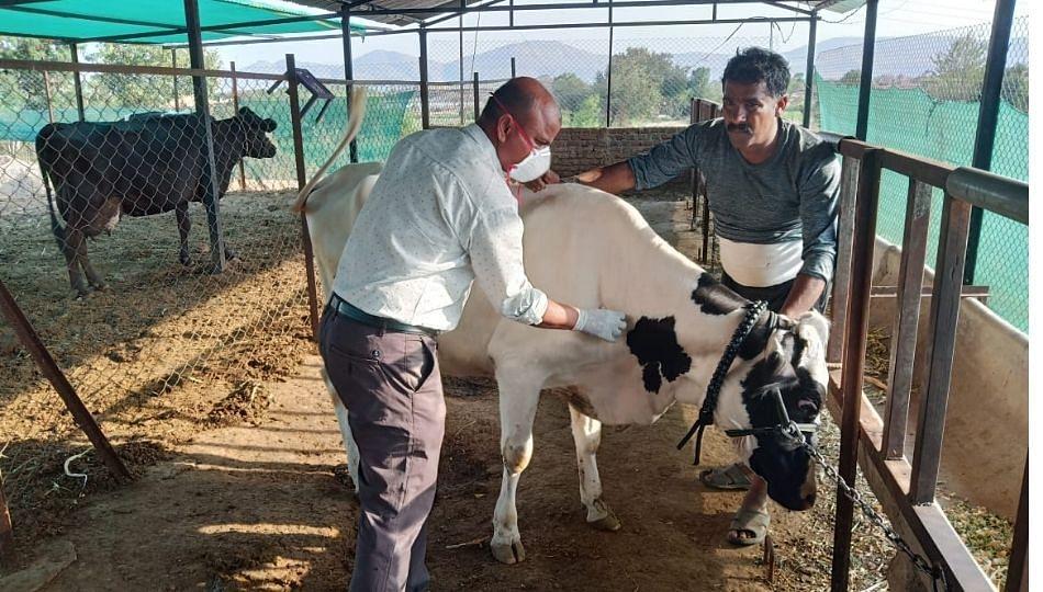 विविध मागण्यांसाठी पशुवैद्यकीय अधिकाऱ्यांचा आंदोलनाचा पावित्रा