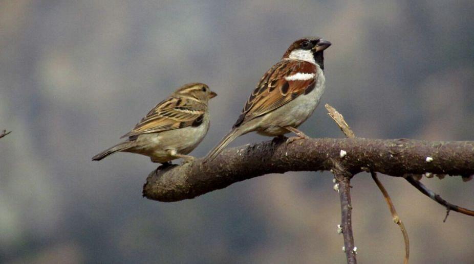 भटवाडी सरपंच आणि ग्रामस्थांचा स्तुत्य उपक्रम...पर्यावरणपूरक रक्षाविसर्जन आणि पक्षी संवर्धन एकाच वेळी