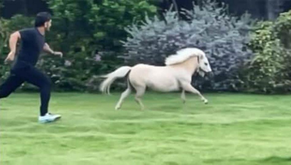 घोड्यापेक्षा वेगाने पळतोय महेंद्रसिंग धोनी; साक्षीने शेयर केला व्हिडिओ