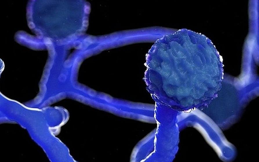 रायगड जिल्ह्यात म्युकरमायक्रोसीस आजाराचा शिरकाव