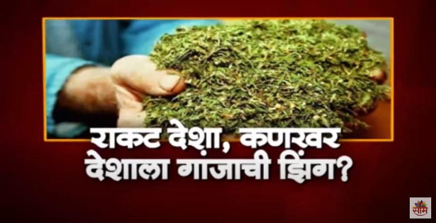 VIDEO | महाराष्ट्राच्या शेतीला गांजाची कीड, धुळे बनलं गांजाचं हब, मुंबईचंही कनेक्शन