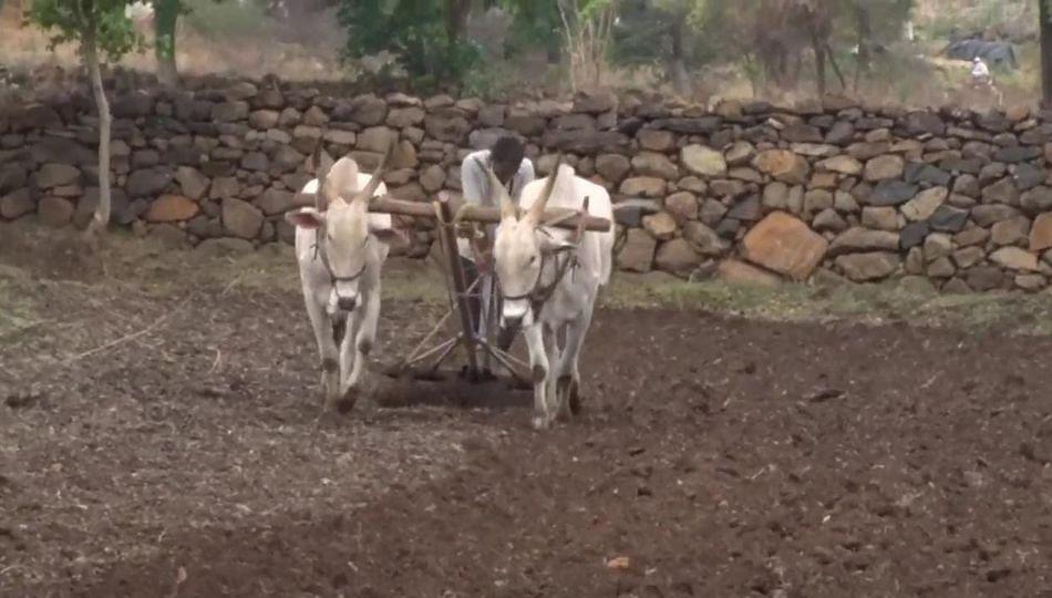 शेतकऱ्यांनो खरीपाच्या पेरणीला घाई करु नका