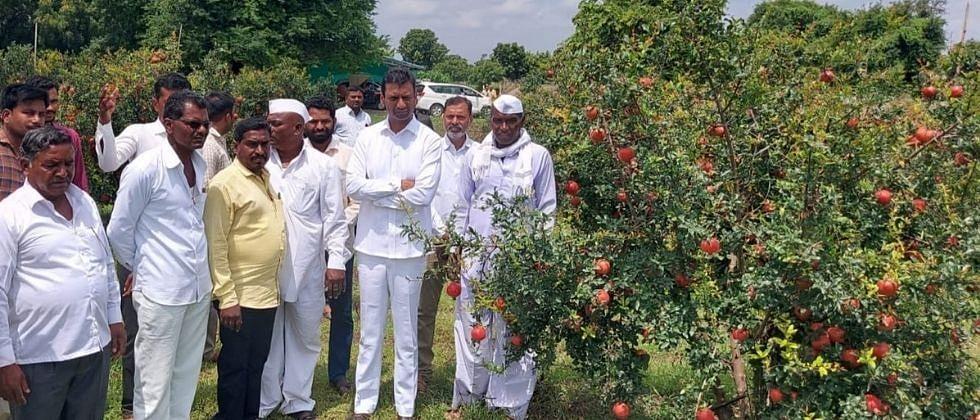 मंत्री गडाखांना शेतकऱ्यानी दिली डाळिंब भेट