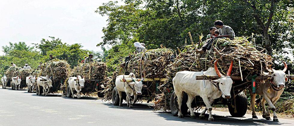 शेतकऱ्यांसाठी मोठी बातमी : उसाचा गाळप हंगाम 15 ऑक्टोबरपासून