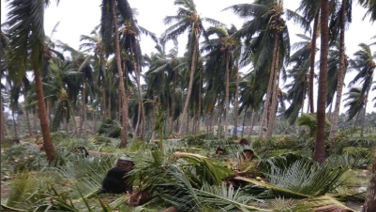 கஜாவால் டெல்டாவில் பெரும் சேதம் ஏற்பட்டுள்ளது.. மத்தியக்குழு  அதிர்ச்சி