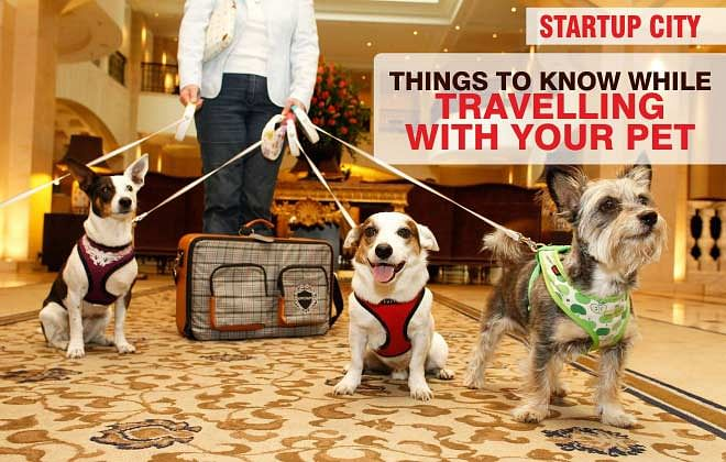 IMPORTANT THINGS TO KNOW BEFORE TRAVELLING WITH PETS
