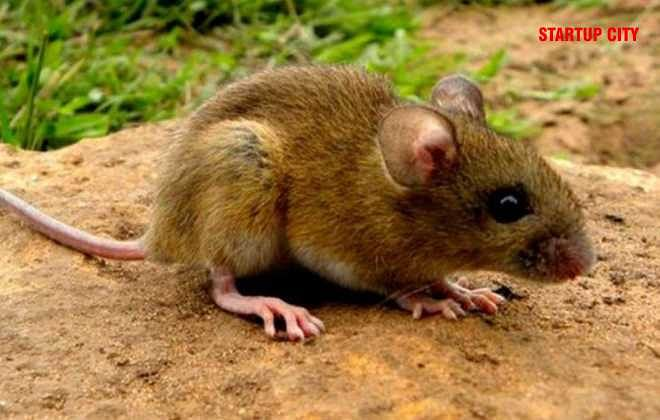 All You Need To Know About Hantavirus- Here's Why You Shouldn't Worry