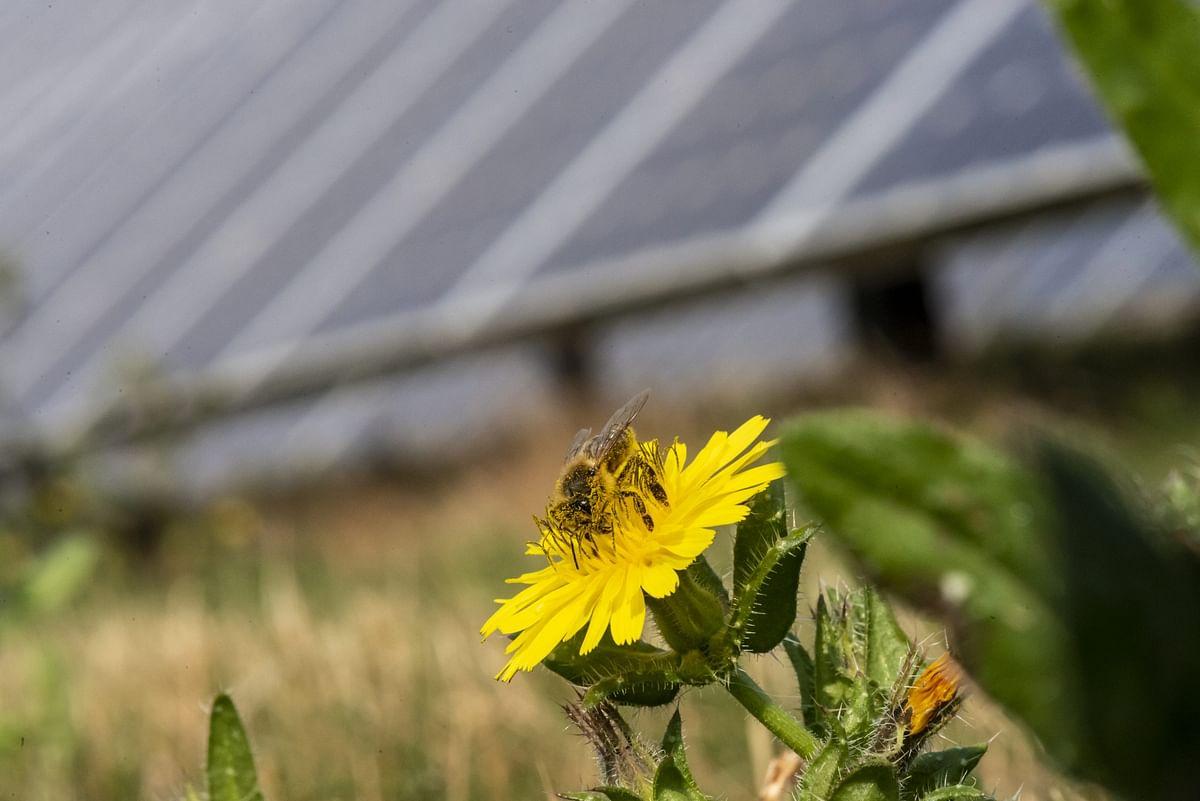 Lightsource bp inks Bellflower Solar Farm VPPA with Verizon