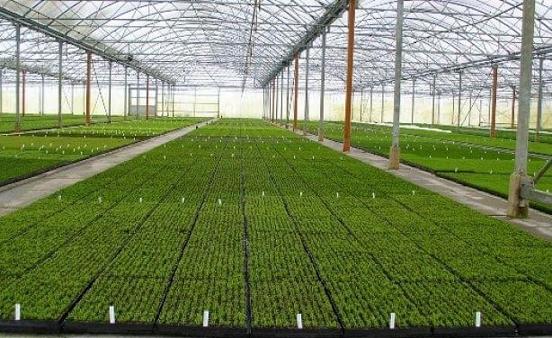 Ethiopia to Build New Agro Industrial Park in Nekemte