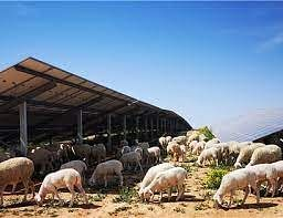 Iberdrola Puts Photovoltaic Plant in Teruel into Operation
