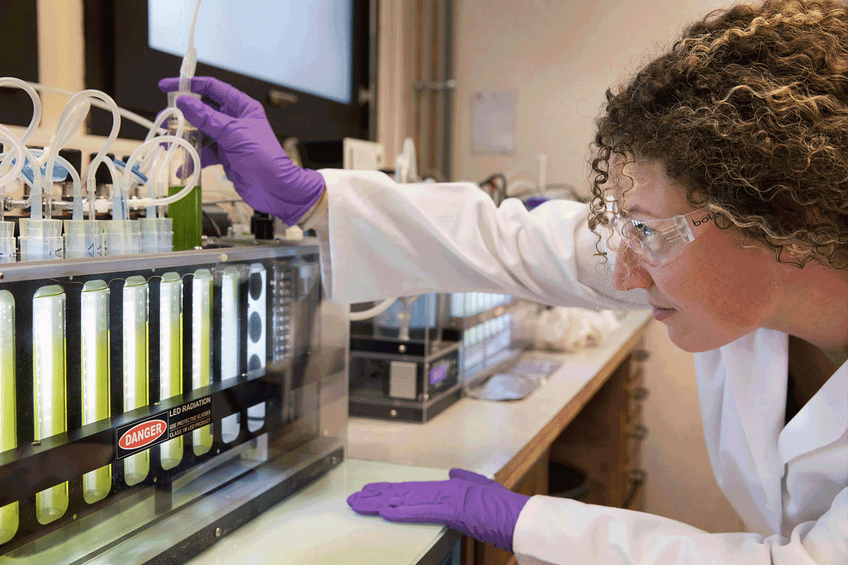 TotalEnergies & Veolia to Develop CO2-based Microalgae Cultivation