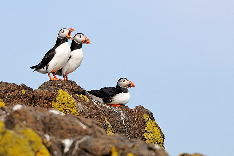 SSE Partners with Microsoft, Avanade & NatureScot for Puffin Pilot