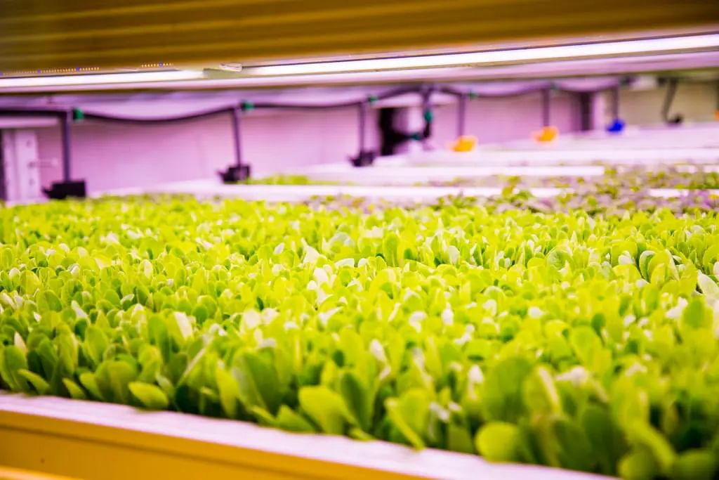 &ever to Launch Mega Vegetable Farm in Singapore