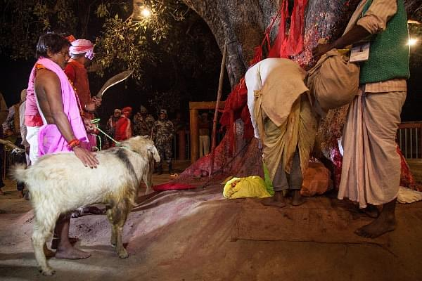 Tripura HC Bans Animal Sacrifice In Hindu Temples; Refuses To Consider Bakr-Eid Argument