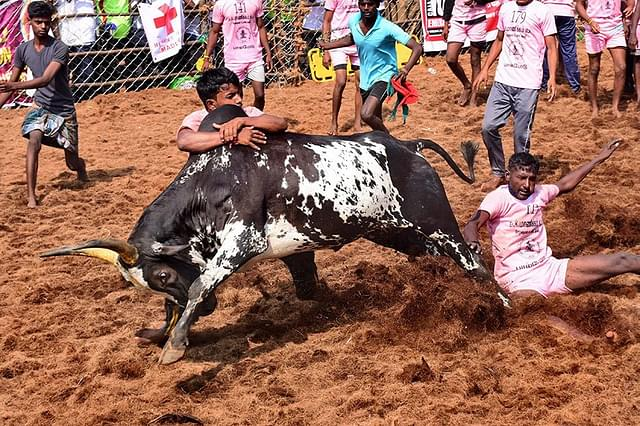 Viralimali Jallikattu Creates Record For Number Of Bulls Participating, Two Killed During Event