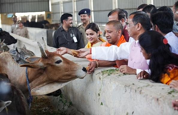 Yogi Govt Approves Ordinance To Prevent Cow Slaughter, Violators To Be Jailed For Up To 7 Years