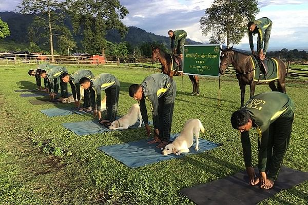 ITBP dogs performing yoga along with humans (@ANI/Twitter)