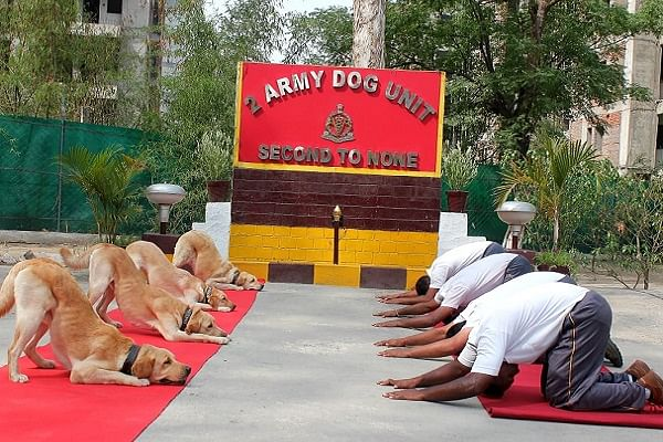 Army dog unit performing yoga (@SpokespersonMOD/Twitter)