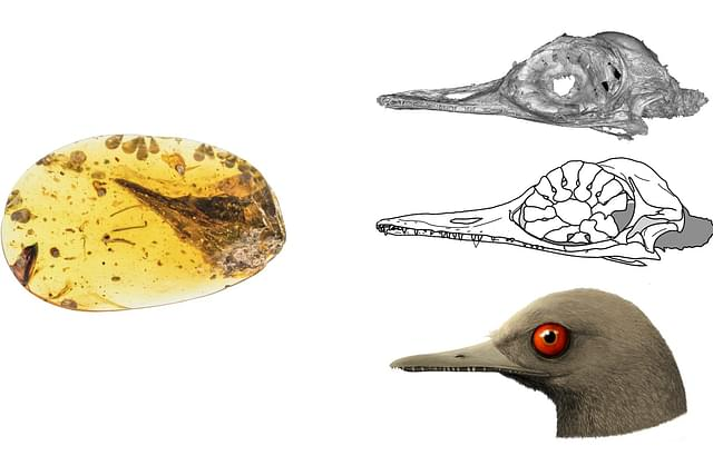 This Discovery Of The Smallest Dinosaur Also Reconfirms Some Facts Of Early Geography