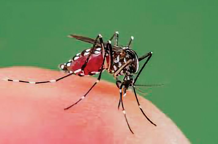 Drug-resistant malaria spreading fast in South-East Asia