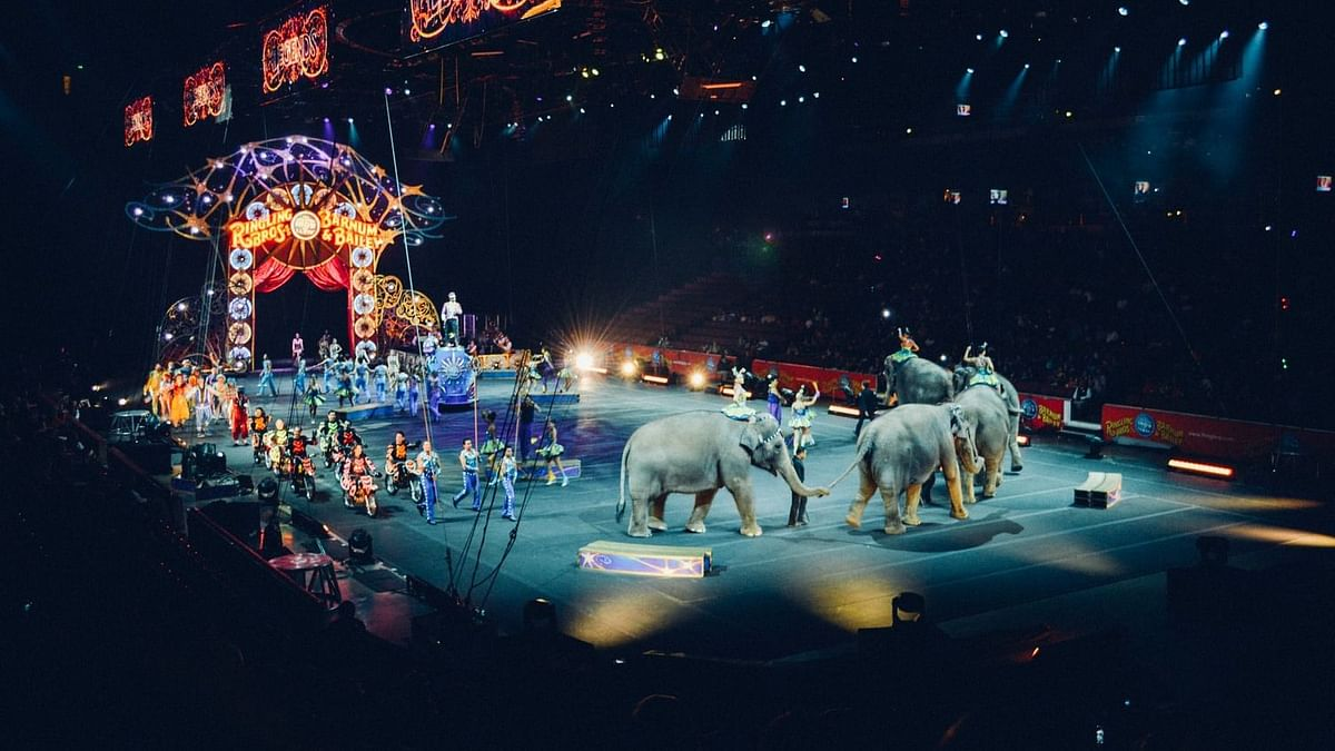 COVID-19 impact: Circus on the verge of extinction