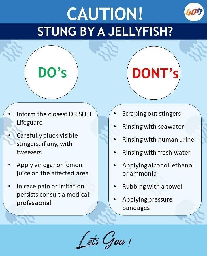 Goa advisory against jellyfish sting