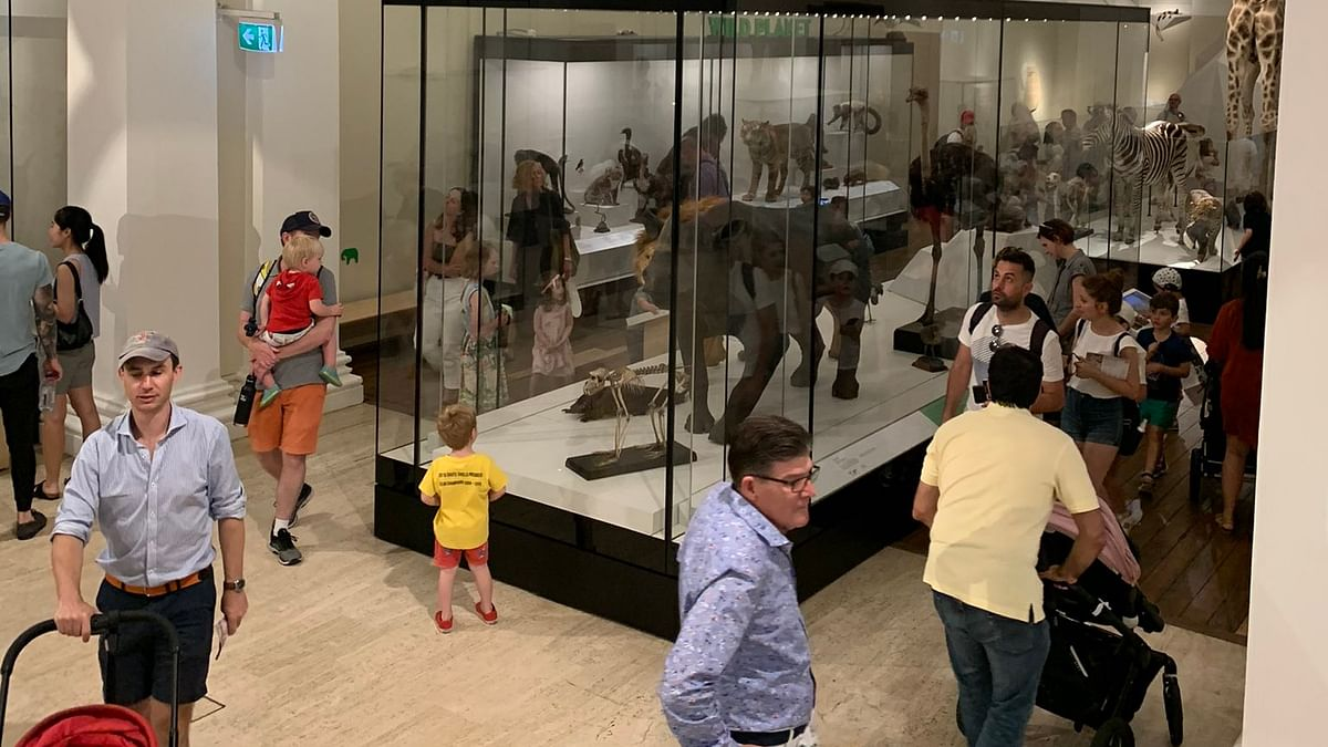 Night at the Museum: Australia's oldest museum offers late-night entertainment