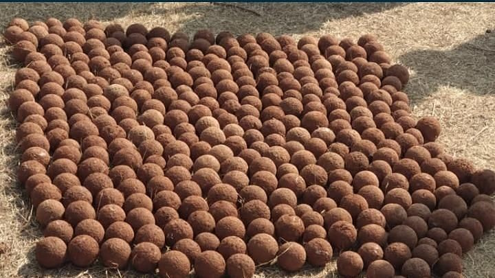 Kolhapur: In one of the biggest finds over 400 cannonballs discovered at Pavangad fort