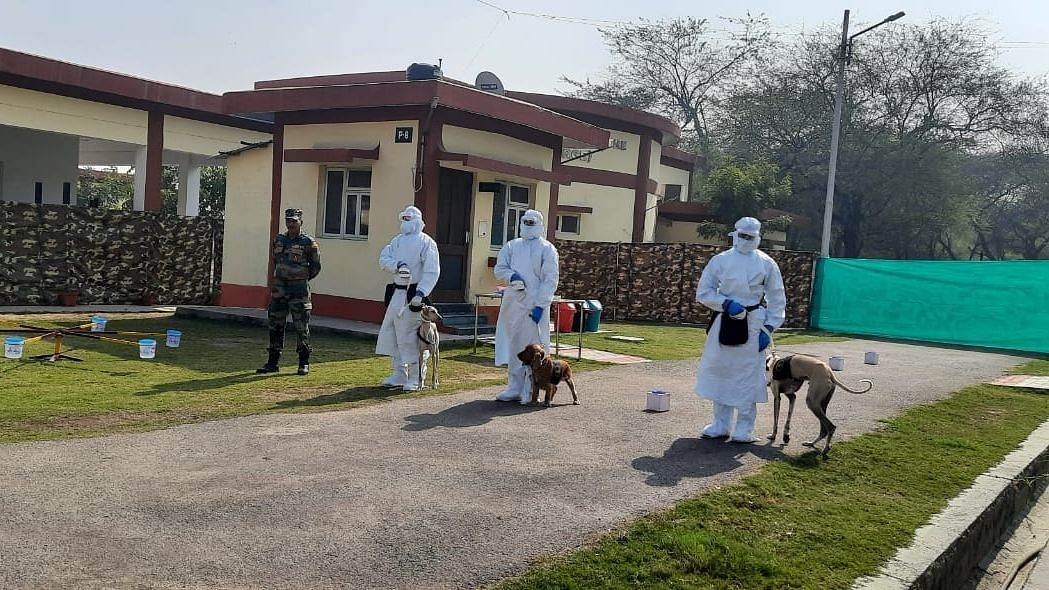 Why wait for test? Indian Army now trains dogs to sniff out COVID-19