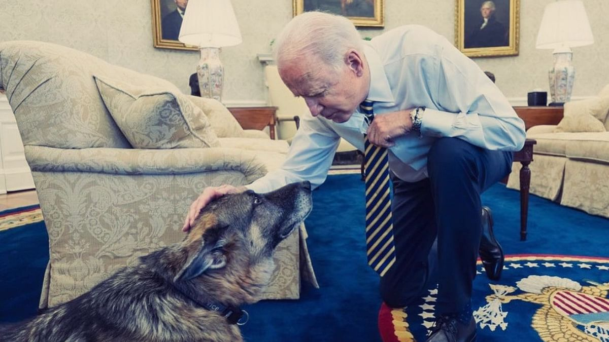 Here's why Joe Biden's Dogs are being banished from the White House