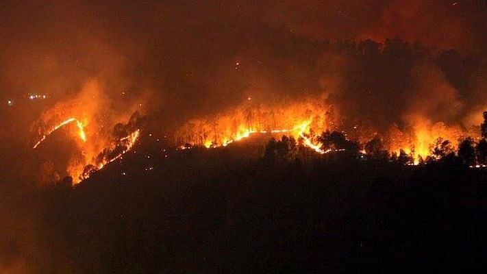 Bandhavgarh Tiger Reserve fire: Two days after, reason behind the wildfire still unknown