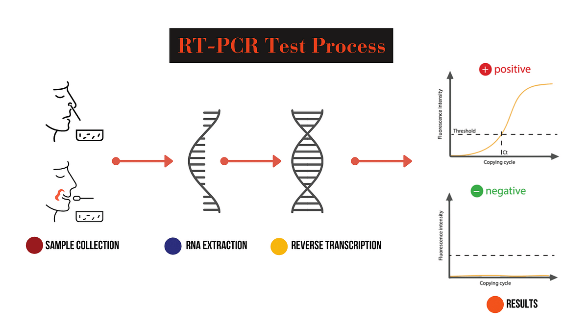 RT-PCR test uses a process to convert coronavirus's RNA into DNA so that the infection can be detected