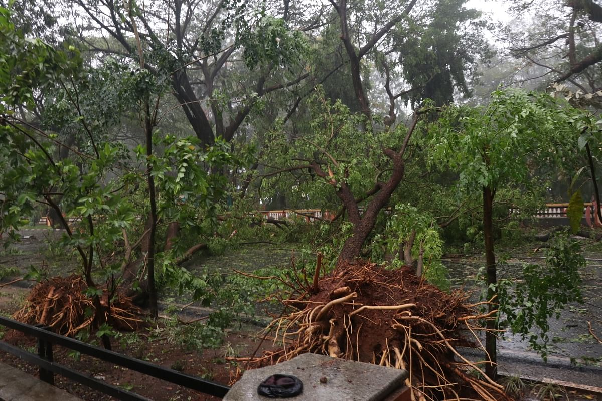 Many trees were uprooted in Goa due to Cyclone Tauktae