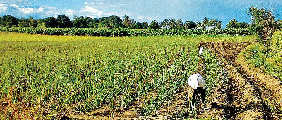 Farm woes to take centrestage as poll battle looms