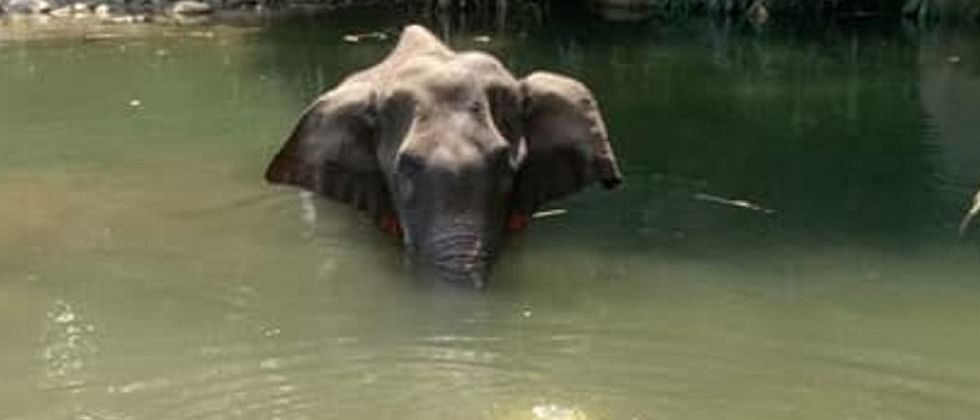 This country recorded highest annual elephant deaths