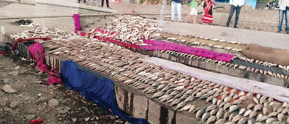 Thousands of fish dead due to water pollution