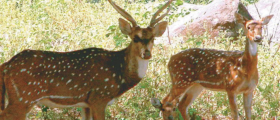 2 injured deer rescued from Thane buildings