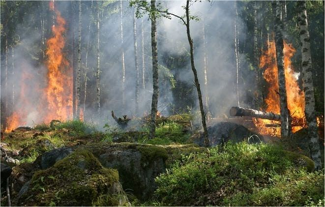 TOP 5 REASONS FOR AMAZON FIRE CATASTROPHE, IS THE ENVIRONMENT ATROCIOUSLY DECAYING?