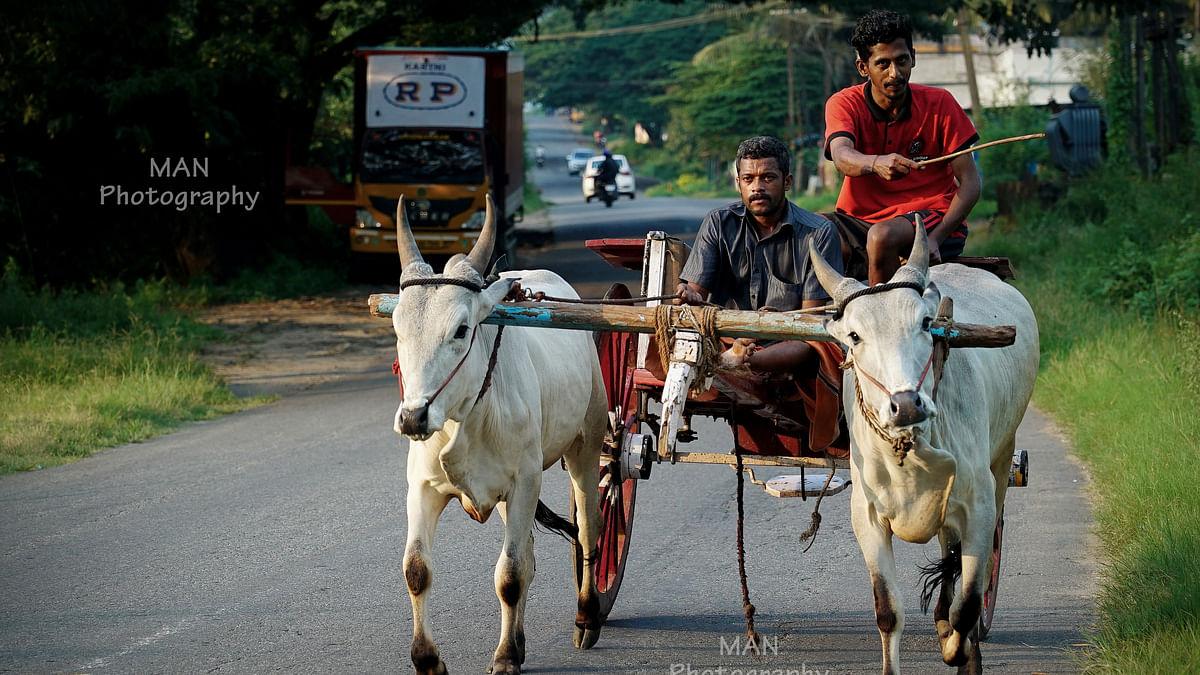പാലക്കാട്, തമിഴ്നാട് അതിര്ത്തി ഗ്രാമത്തിലെ  കാഴ്ചകള്