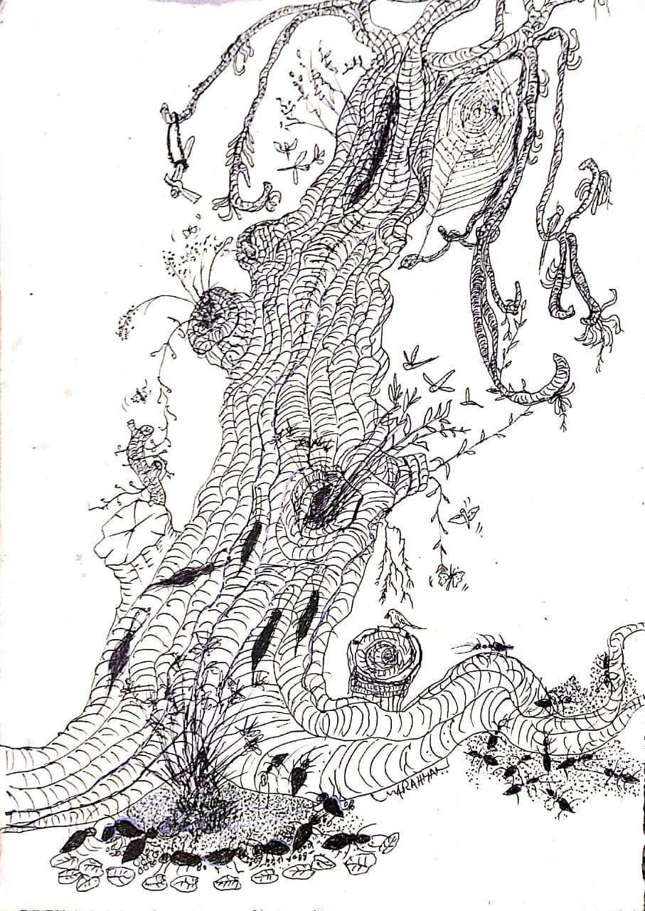 പ്ളാന്റേഷൻ കോർപ്പറേഷന്റെ കശുവണ്ടി എസ്റ്ററ്റിൽ  ജീർണിച്ച് മരിച്ചു കൊണ്ടിരിക്കുന്ന ഒരു വൻമരം -- സ്ക ച്ച്.എം.എ.റഹ്മാൻ